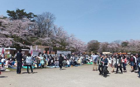 【秋田市】4月17日~28日は千秋公園桜まつりへ🌸