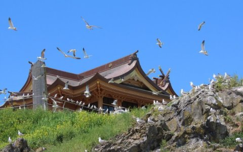 青森県八戸市~蕪島神社・ウミネコと戯れる旅~