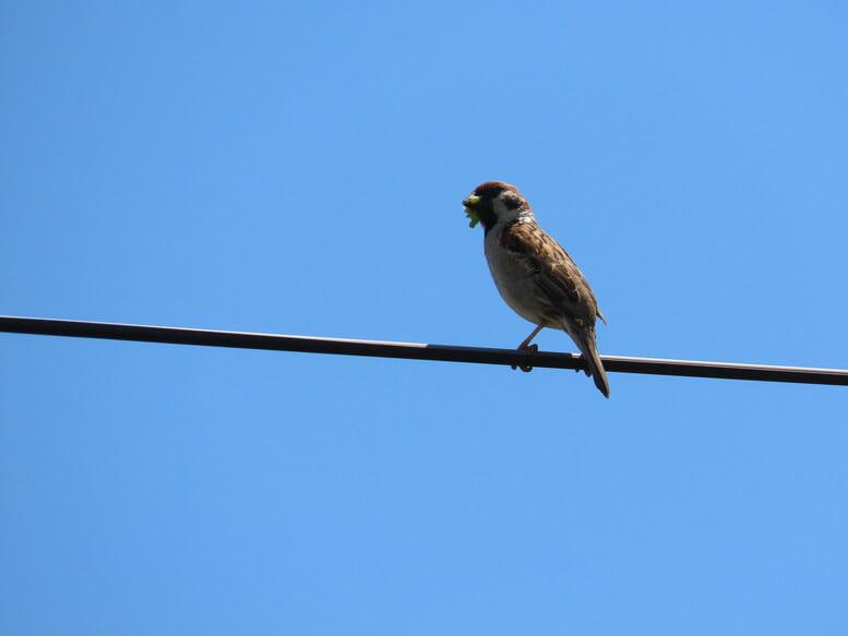 青森県八戸市 三陸ジオパーク みちのく潮風トレイル 海岸 野鳥 雀 すずめ