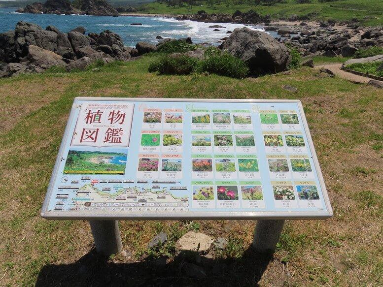 青森県八戸市 三陸ジオパーク みちのく潮風トレイル 中須賀